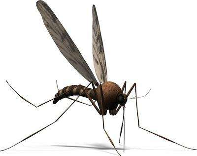 The Ultimate Predator: The Upper Peninsula Mosquito