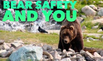Bear Safety and You